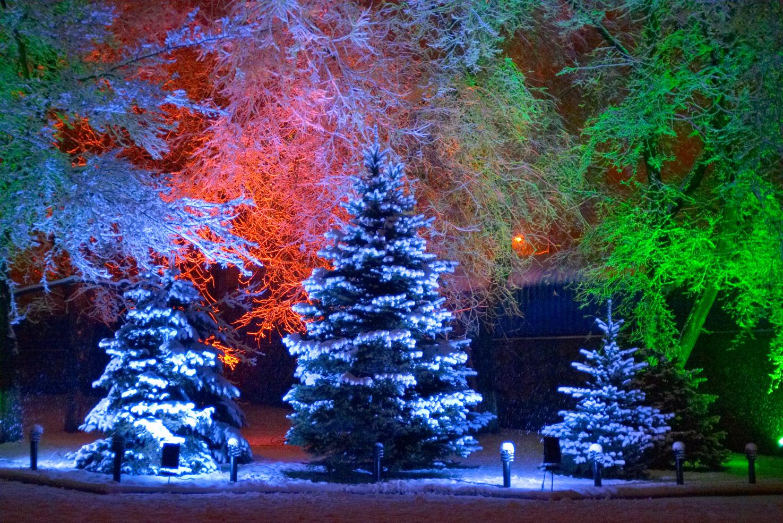 Atmosfera natalizia realizzata con l'uso sapiente delle luci su alberi già esistenti in giardino