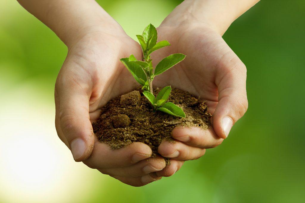 La cura del verde urbano per una nuova rivoluzione green