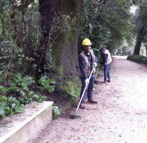 Gli Accolti Attivi impegnati nelle aree verdi della Reggia di Caserta ed al Giardino Flora